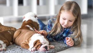 Young girl with her new english bulldog puppy