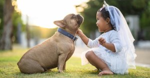 French Bulldog and young girl in a white dress