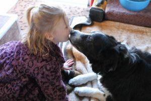 Border Collie kissing owner