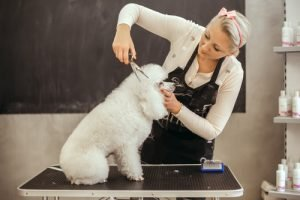 poodle being groomed by professional