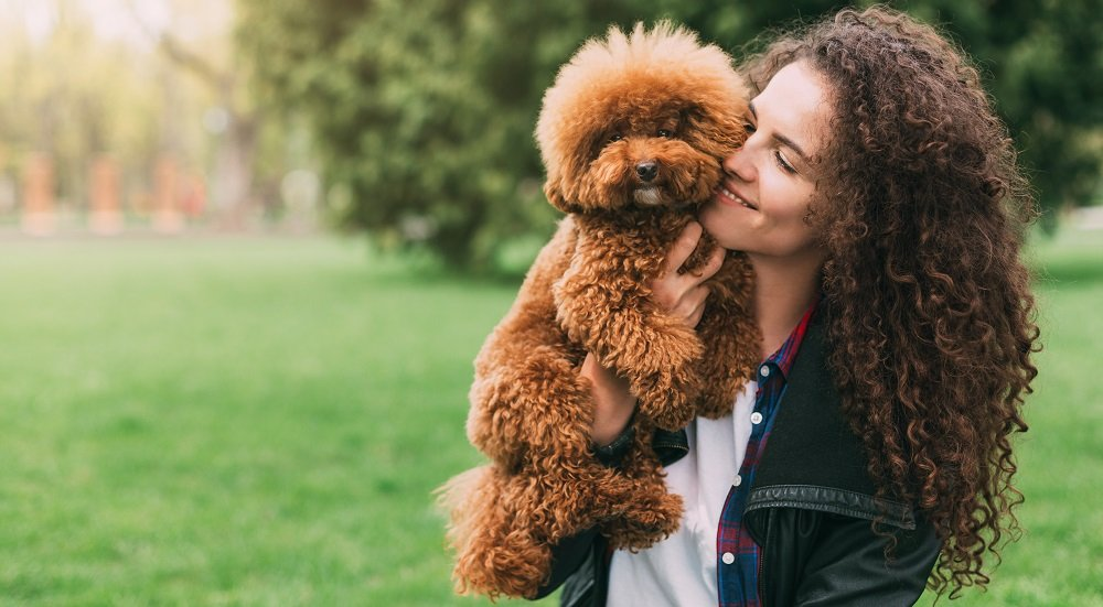 How to be a Great Poodle Owner Right from Day One