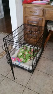 dog crate in home