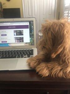 Miniature goldendoodles laptop