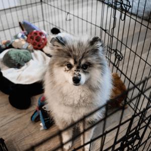 Pmsky cage