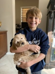 Miniature goldendoodles with kid