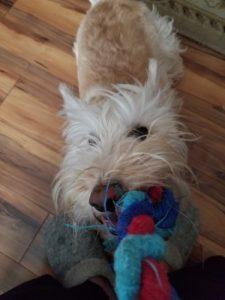 Scottish terrier toy