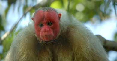 Primates episode 1 recap - an impressive look at our closest animal relatives