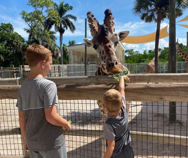 Naples Zoo at Carribean Gardens Giraffe Feeding