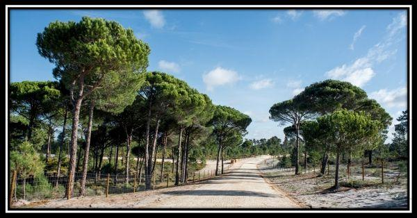 Muda Reserve Comporta Property for Sale