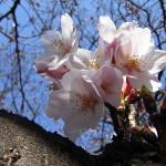 お花見には欠かせない上野公園の屋台の場所や時間帯情報