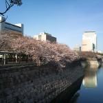 お花見に行こう!大阪城公園の桜の見ごろはいつ?