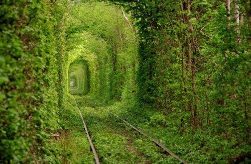 出典:Tunnel of Love in Ukraine | Places To See In Your Lifetime