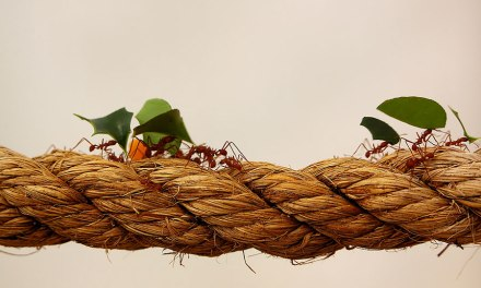 The Day I Learnt About Leadership From Bugs
