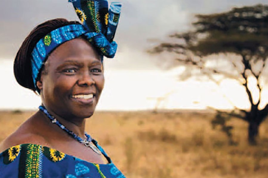 Image result for wangari maathai