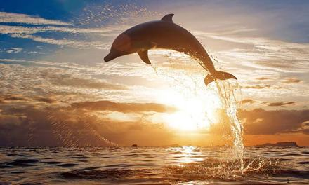 What is 'Dolphin's-eye View' Leadership?