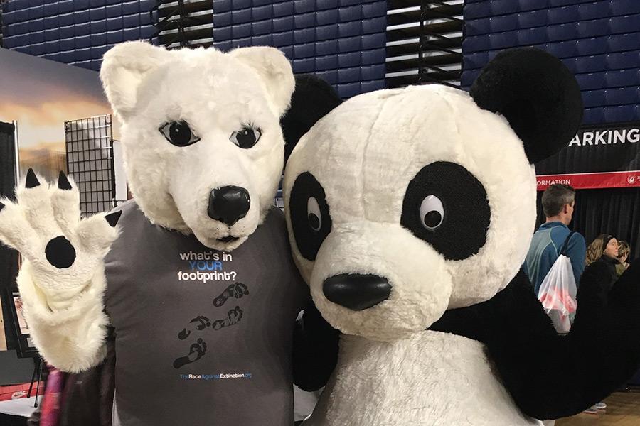Polar Bear Accepts Dare to Run Washington Marathon