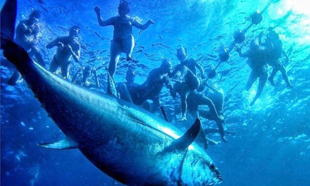 How Balfegó Tuna Can Help Executives Grow as Leaders