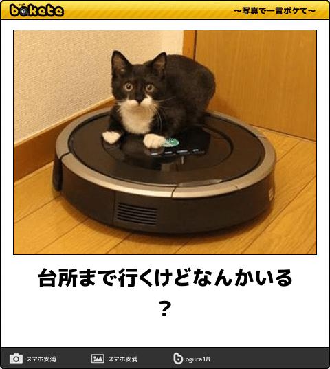 【ボケて傑作選】フフッてなった画像Vol.285