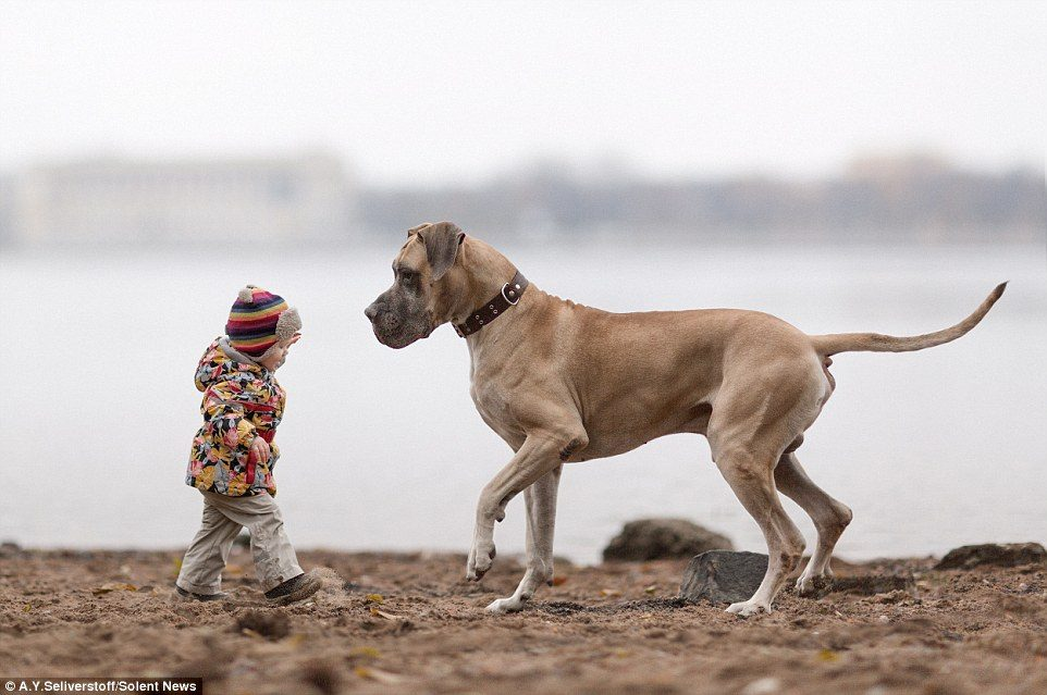 dogs-and-kids-8