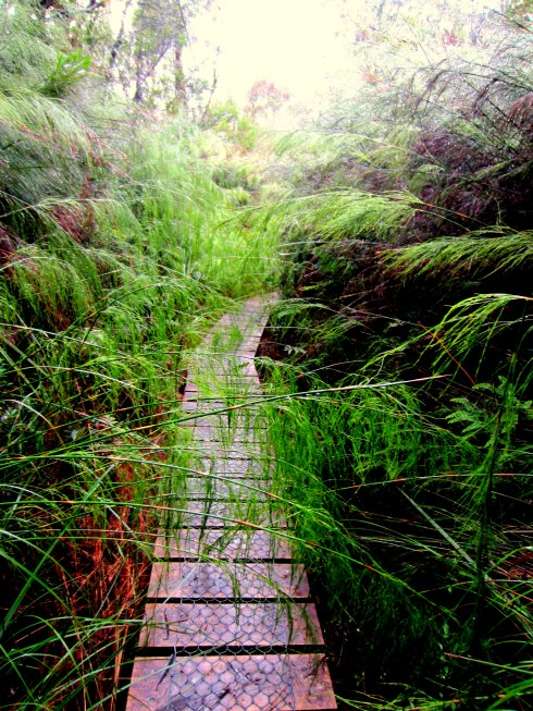This is what all our walking paths through the forest looked like...