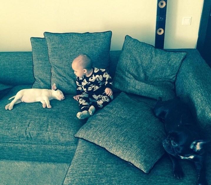 Antonia și Alex Velea au acasă doi câini frumoși de rasă. Fotografii speciale cu animalele de companie