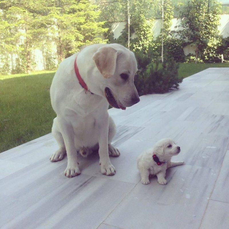 Andreea Bălan are doi câini fantastici și se prăpădește după ei. Imagini unice cu animalele ei de companie