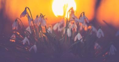 Temperaturi anormal de ridicate în următoarele zile în întreaga Românie. ANM a anunțat cum va fi vremea până pe 14 februarie. Prognoza meteo