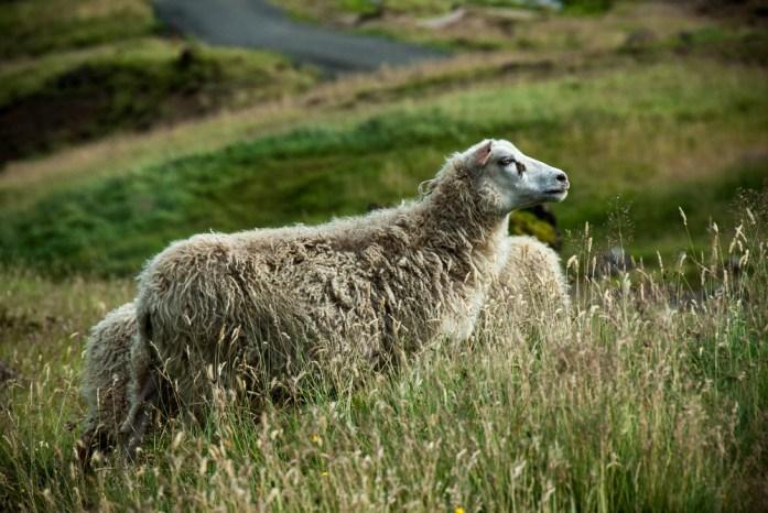 Počasí na Islandu: jaro