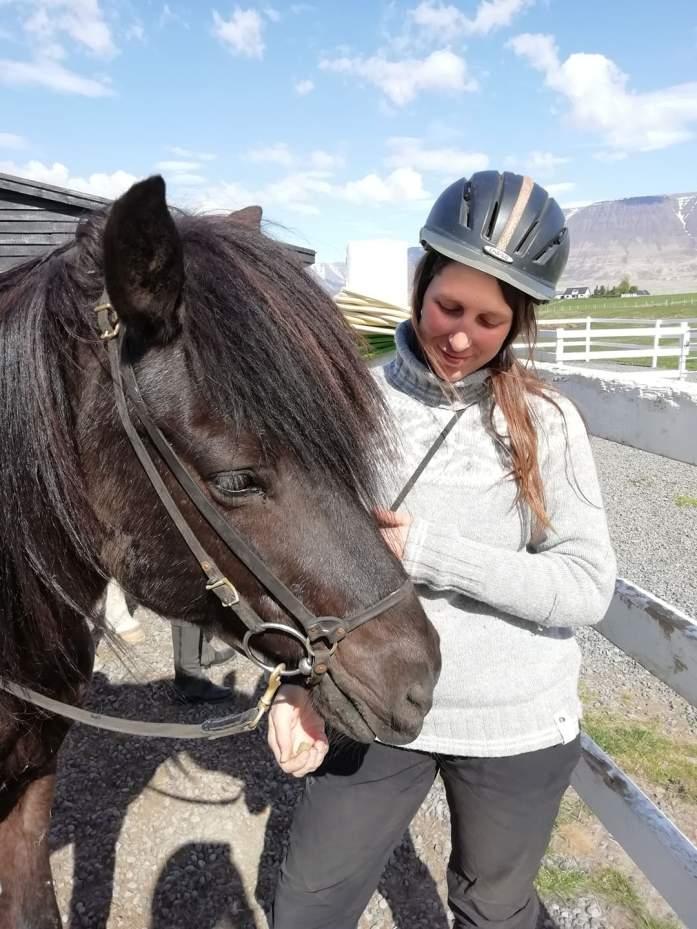 Koně na Islandu