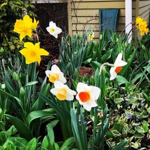 Flowers in Bellingham Washington