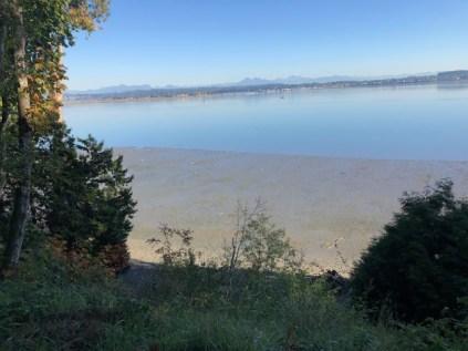 Low tide at Bellingham Bay
