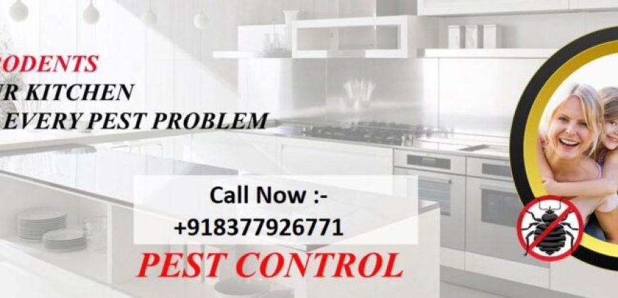 Pest Control Delhi