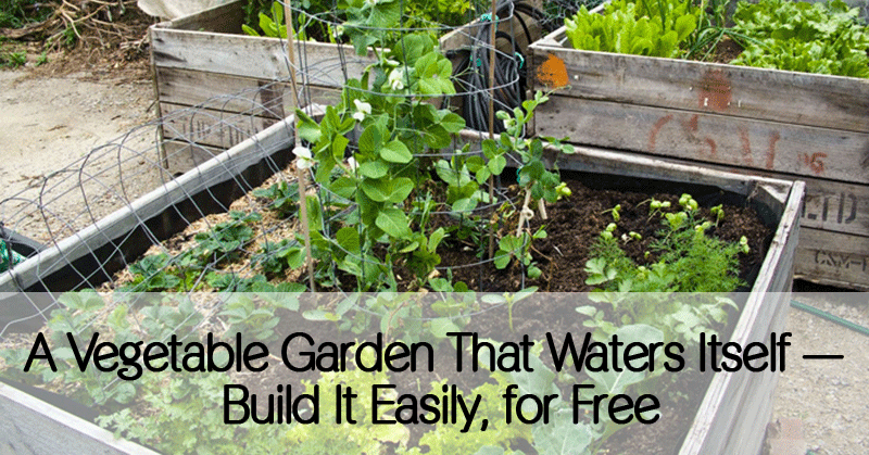 A Vegetable Garden That Waters Itself Build It Easily And