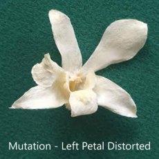 Left-Petal