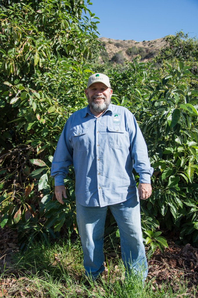 Visiting Our Organic Avocado Farm   A Story of Family, Legacy, and Perfect Produce