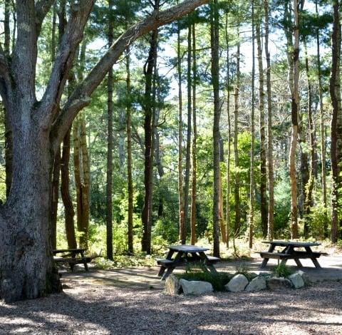 Nickerson State Park rfrd