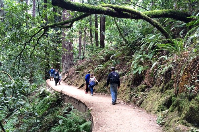 Muir Woods is just a short drive from the Lodge at Tiburon.