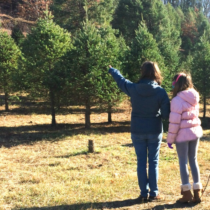 Searching for the perfect Christmas tree!