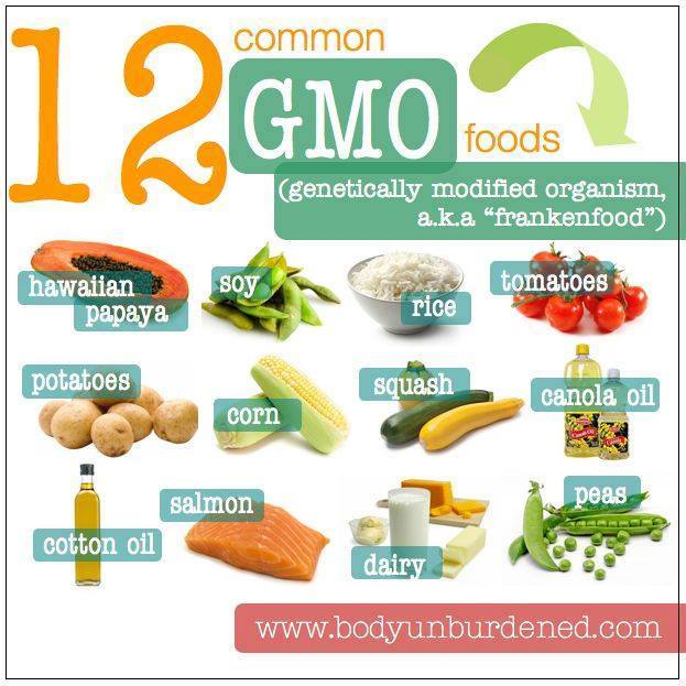 gmo-foods Why YOU should care about GMO's in our food supply…...