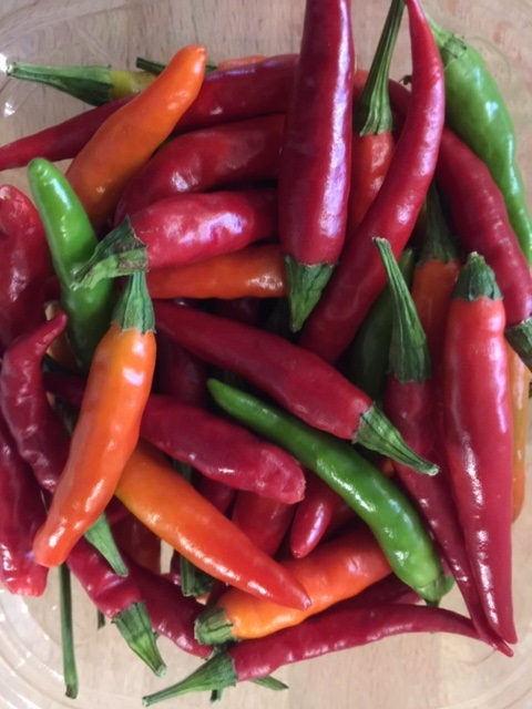Japanese Hot Peppers - 3/4 pint - Real Foods Farm - Wimberley, Texas