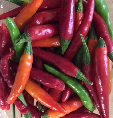 Japanese Hot Peppers