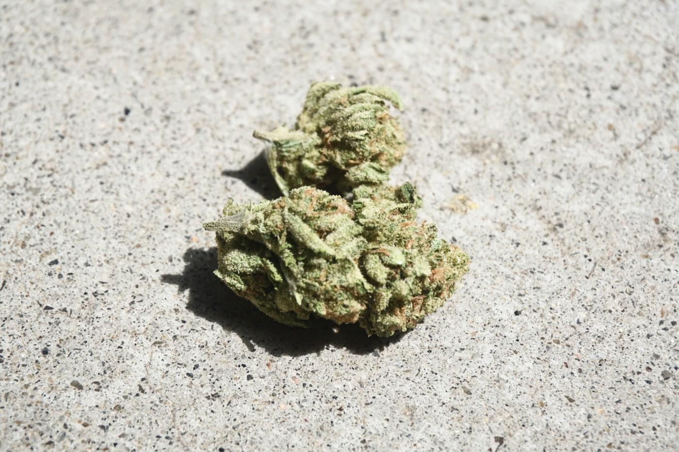 black jack strain