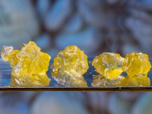 canary diamonds live resin