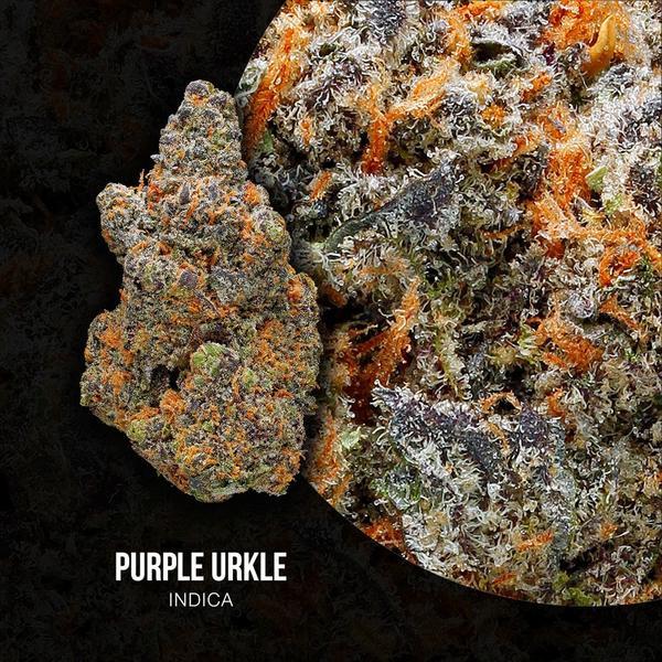 Purple_Urkle-Circle