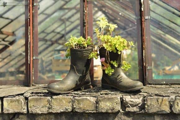 sedums-grass-crop-boots