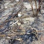 Ossada humana é encontrada por trabalhadores na zona rural de José de Freitas