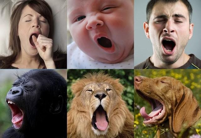 Por que bocejamos? Entenda :