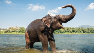 Qual animal tem o menor tempo de vida?