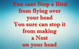 birdsthoughts