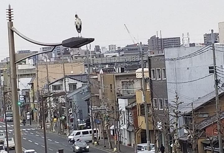 japan_bird3